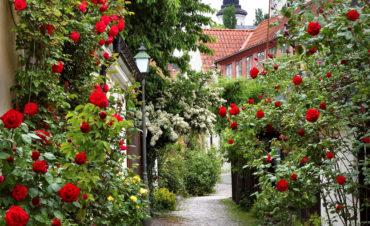 Kryssning till Visby
